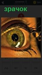 800 слов зрачок глаза крупным планом широко открыт 2 уровень