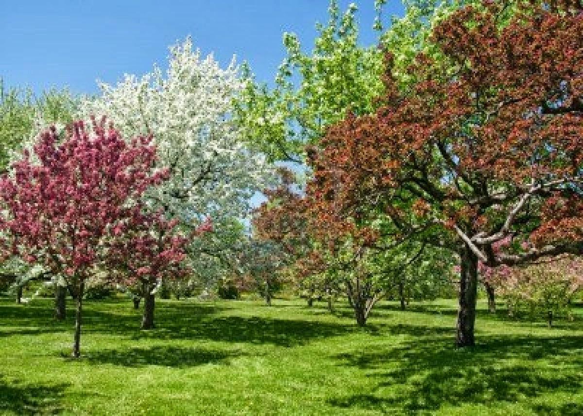 Arte y jardiner a dise o de jardines elegir el rbol for Arboles y arbustos para jardin