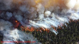 Ongkos Kebakaran Hutan dan Lahan