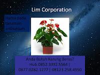 Hama pada tanaman anthurium