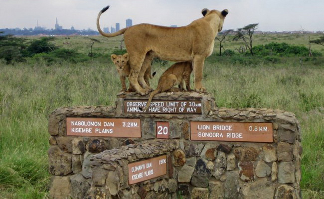 www.xvlor.com Nairobi National Park is protected wildlife among the skyscrapers
