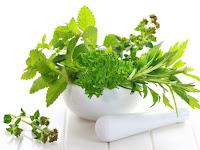 Pusat Obat Sipilis Herbal Online