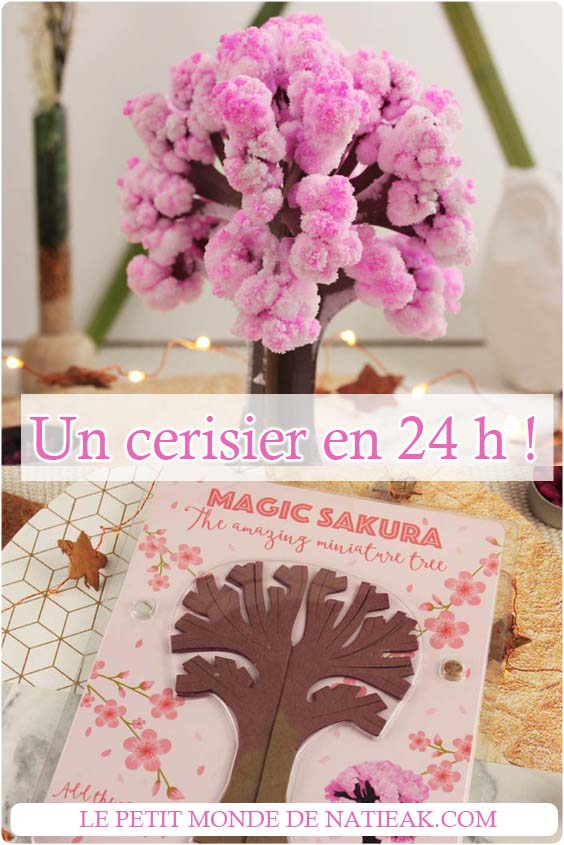 Magic Sakura cerisier miniature en 24 h  !