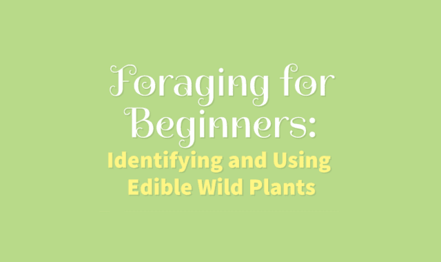 Foraging for Beginners Identifying and Using Edible Wild Plants