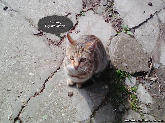 Lea Cat