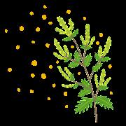 花粉を出すブタクサのイラスト