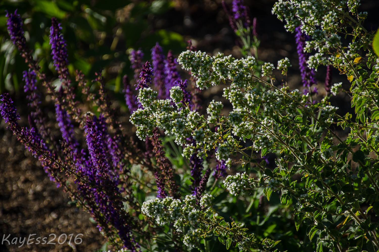Gardenbook Garden Bloggers Bloomday July 2016