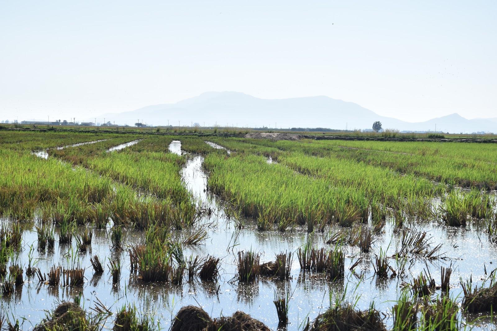 Rowerem wśród flamingów i pól ryżowych