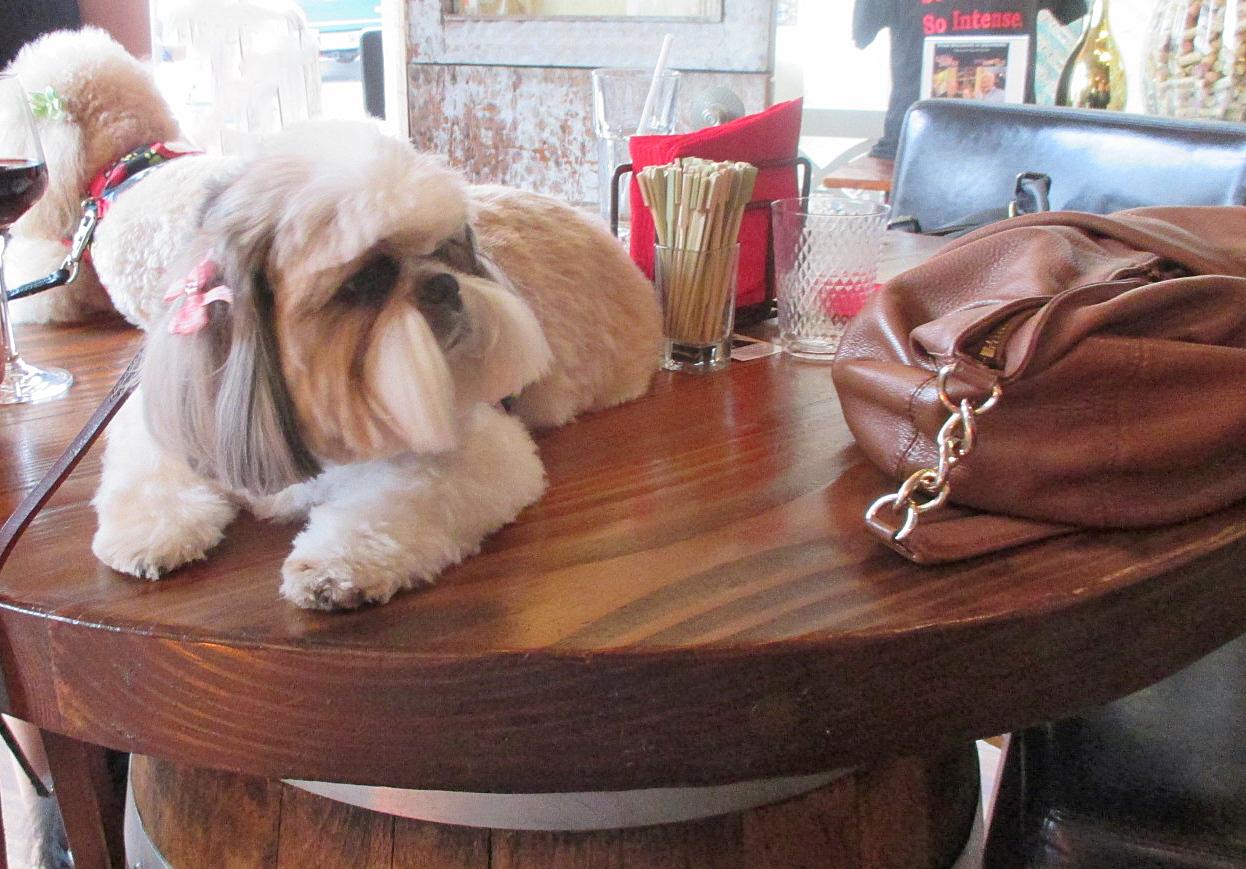 15 Best Dog Friendly Restaurants in Carmel-by-the-Sea