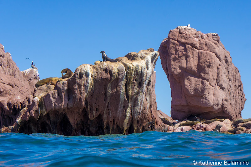 Sea LIons on the Rocks Things to Do in La Paz Mexico