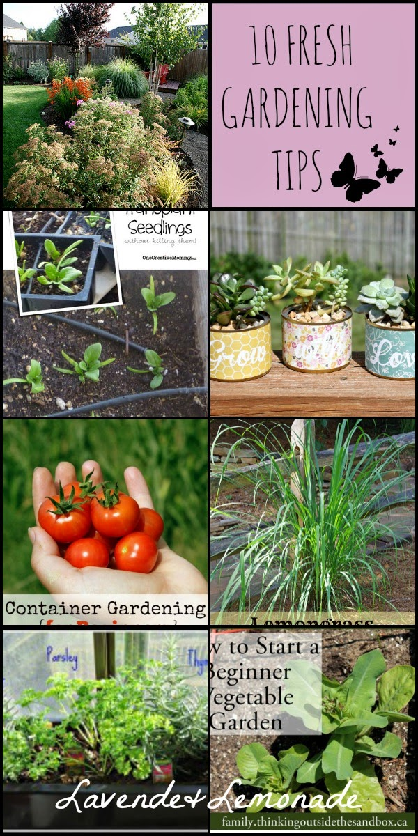 10 FRESH Springtime Garden Tips