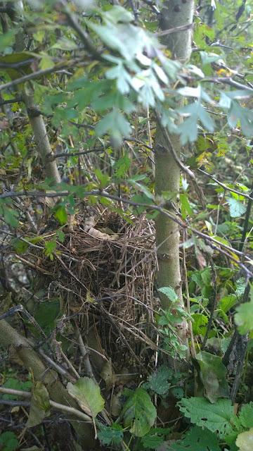 kunstvolles Nest am Weiher (c) by Joachim Wenk