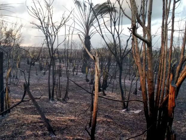 Bombeiros combatem fogo que começou na quarta-feira (6), no município de Santa Cruz Cabrália (Foto: Taisa Moura / TV Santa Cruz)