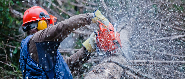 Tree-removal-company-in-Perth