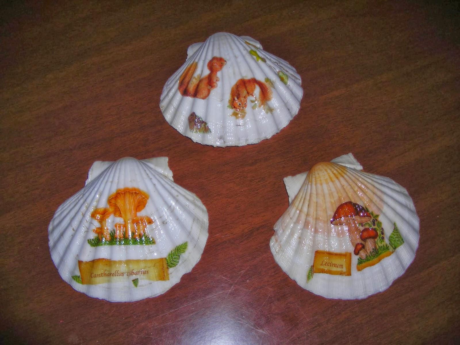 Chari y sus manualidades conchas de vieiras - Como hacer conchas finas ...
