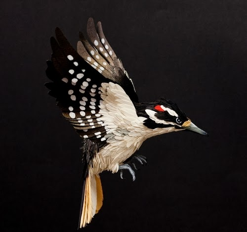 09-Hairy-Woodpecker-Paper-Bird-Sculptures-Colombian-Artist-Diana-Beltran-Herrera-www-designstack-co