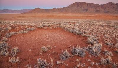 Misteri Lingkaran Peri di Namibia Terpecahkan