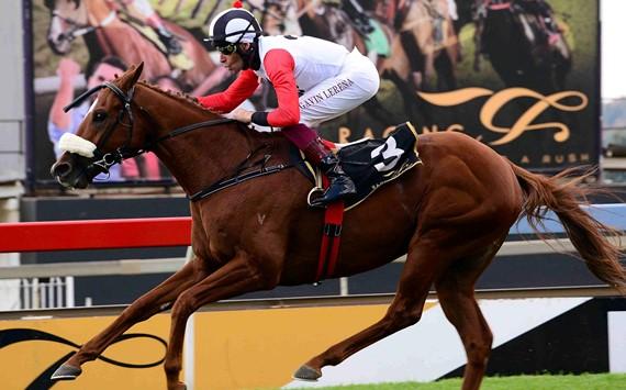 Brazuca - Horse - Vodacom Durban July 2017 - Horse Racing - Gavin Lerena