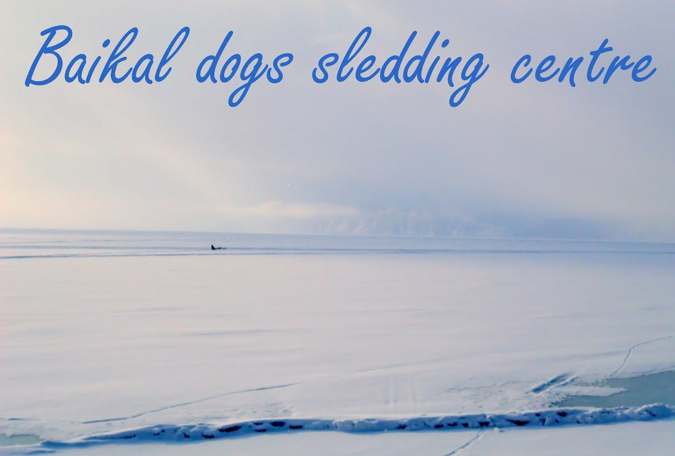Baikal dogs sledding centre