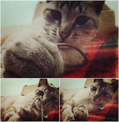 tolstoi-gato-perdido-encontrado