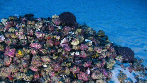 O Recife de Corais da Amazônia recém-descoberto já está ameaçado