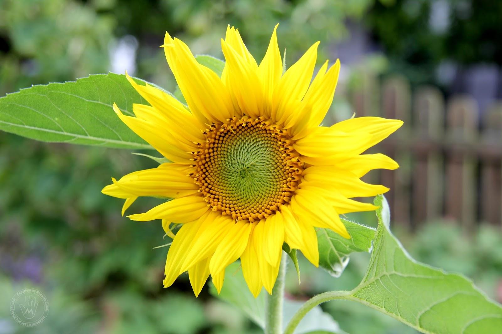 Mikrokosmos MiFoC August Woche 1 Blume