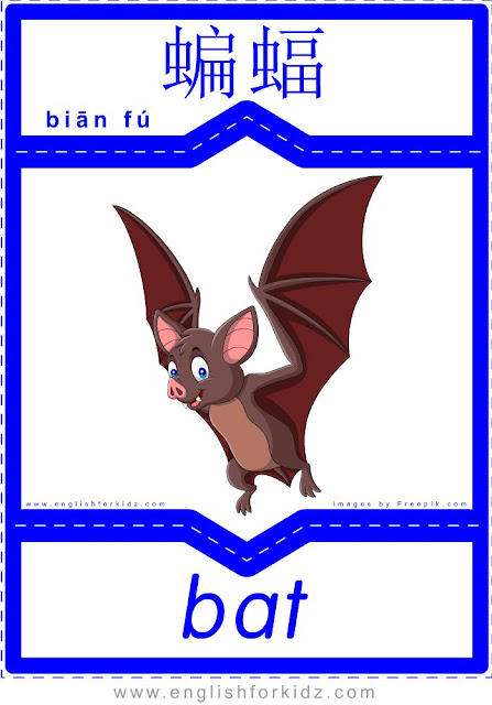 Bat - English-Chinese flashcards for wild animals topic
