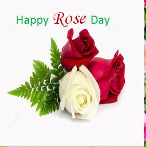 Popular Rose Day Whatsapp DP Images for impressing