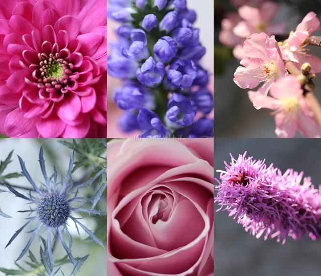 Bloomon Blumen in Makro Aufnahme