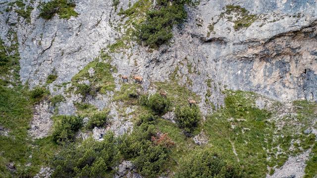 Königsetappe – Austria-Sinabell-Klettersteig und Silberkarsee  Wandern in Ramsau am Dachstein 15