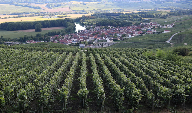 Vineyards in Champagne France