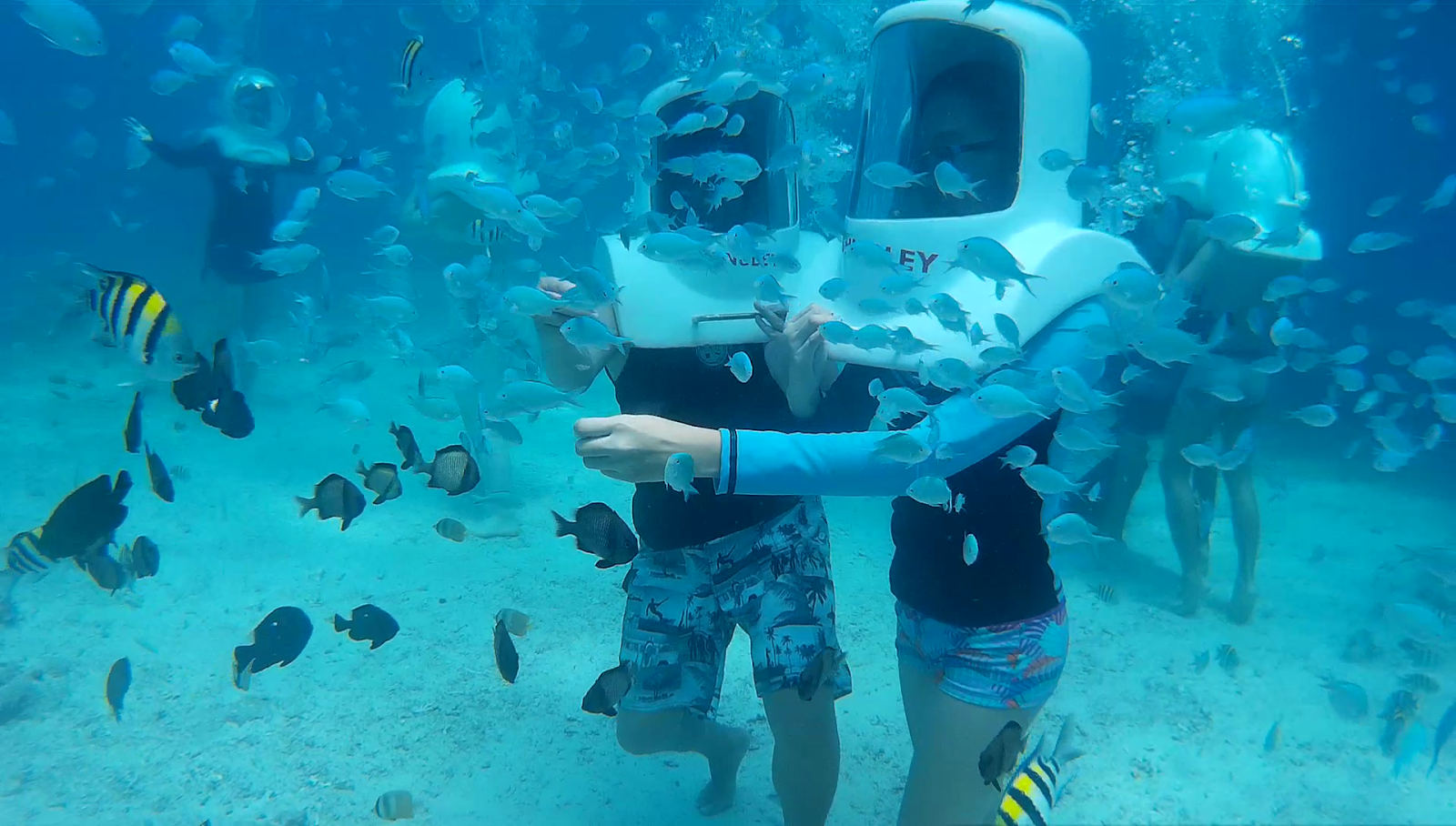 helmet diving while feeding the fishes