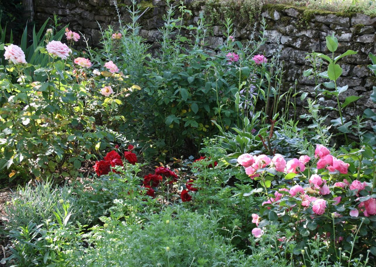 doubs jardin le coin roseraie c 39 est fini. Black Bedroom Furniture Sets. Home Design Ideas