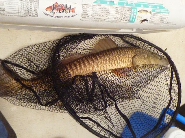 Fishing South of New Orleans & Grilled Redfish on the Half Shell