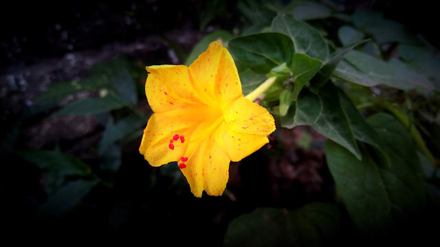 From'S photography | Yellow Flower Images | Pretty Flower Images | Spring Flower Images