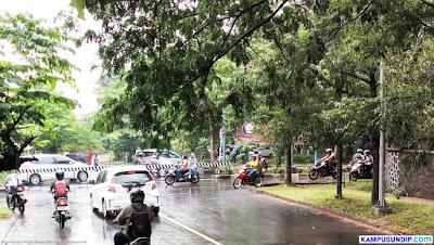 Dahan Pohon di Undip Rawan Tumbang