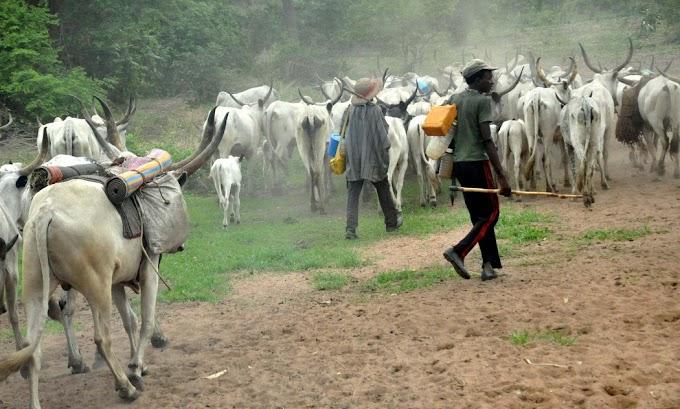 Miyetti Allah Slams Fulani Lawmakers For Failing To Protect Herdsmen