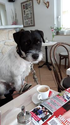 Hundekekse mit Erdnussbutter backen