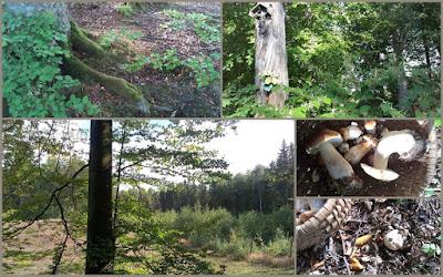 las wrzesień 2015