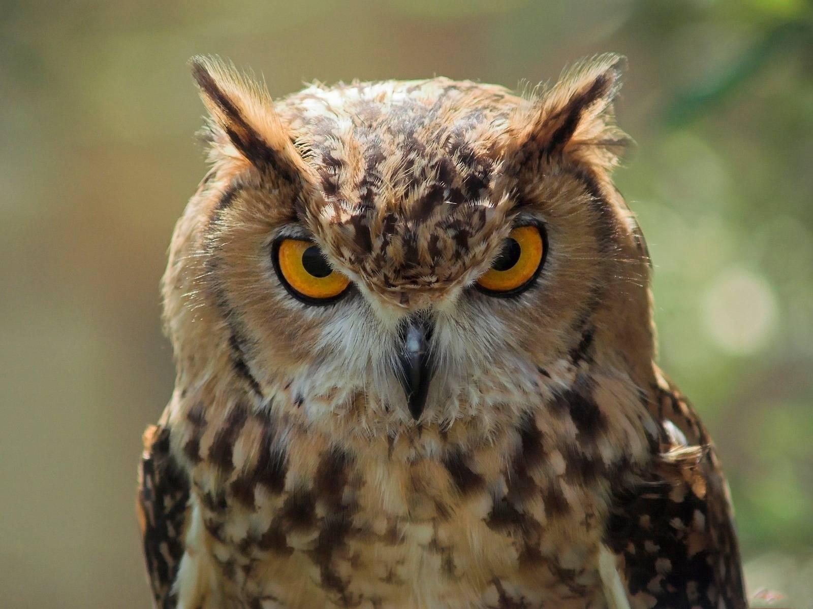 Owl Bird Houses