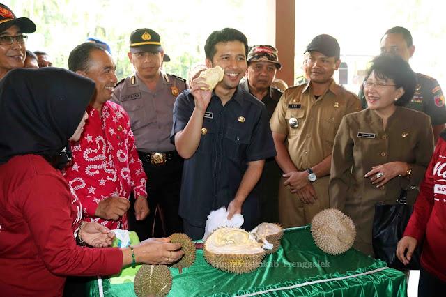 Tidak Hanya Unggul Komparatif, Durian Trenggalek juga Berkualitas