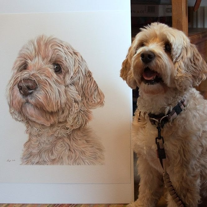 05-Cockapoo-Angie-Cats-Dogs-and-an-Owl-Pencil-Drawings-www-designstack-co