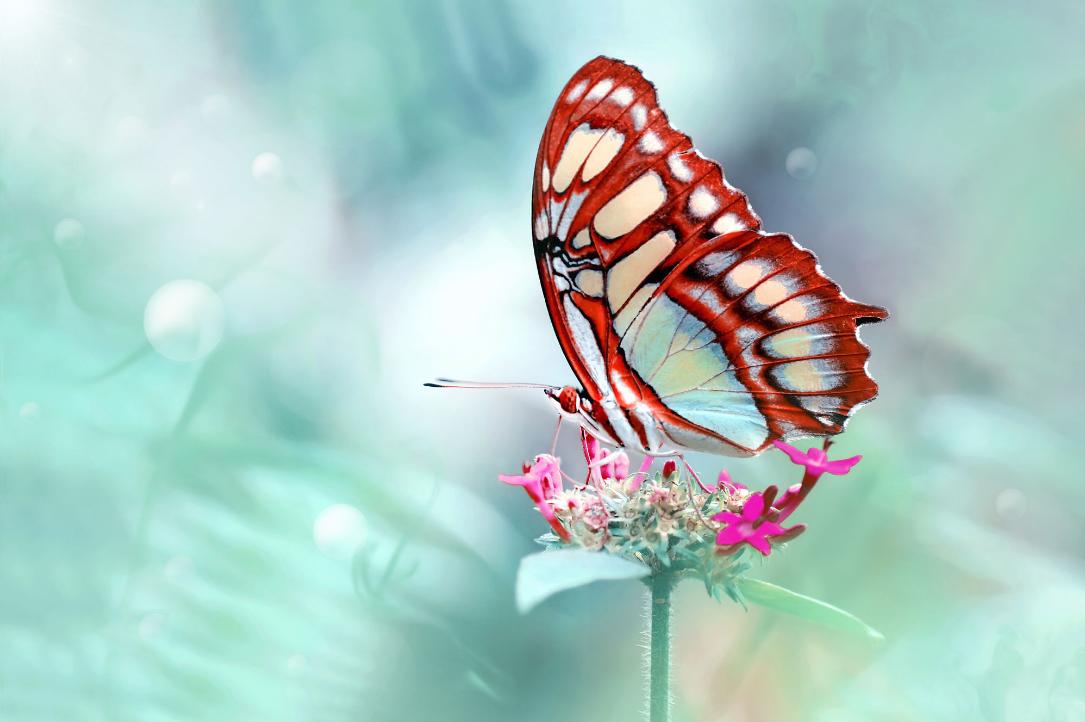 BANCO DE IMÁGENES: Las Mariposas Más Hermosas Del Mundo