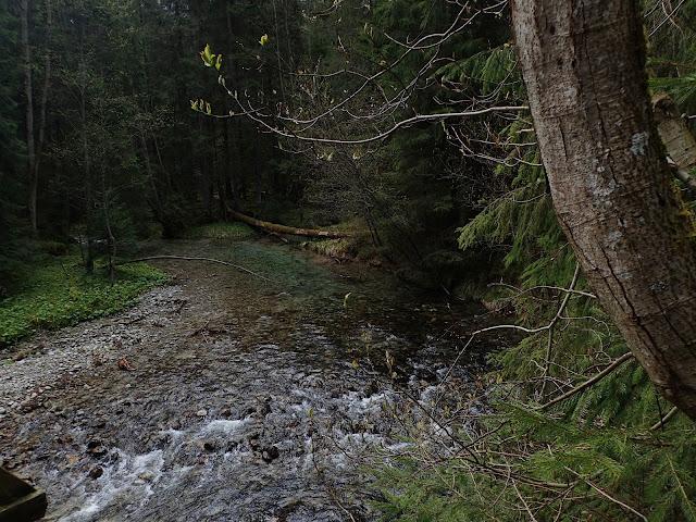 Widok na strumień przy odejściu na starą drogę do Roztoki