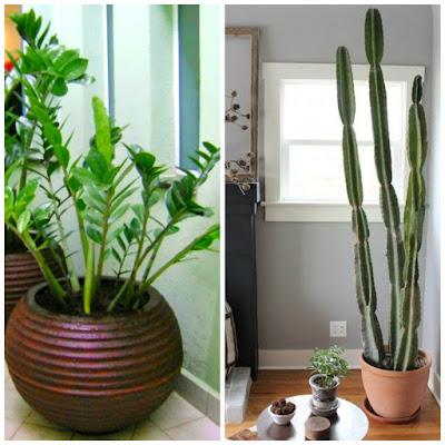 Plantas ideais para ambientes internos dica da arquiteta - Como transplantar cactus ...