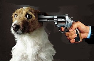 Resultado de imagem para É pecado matar animais?
