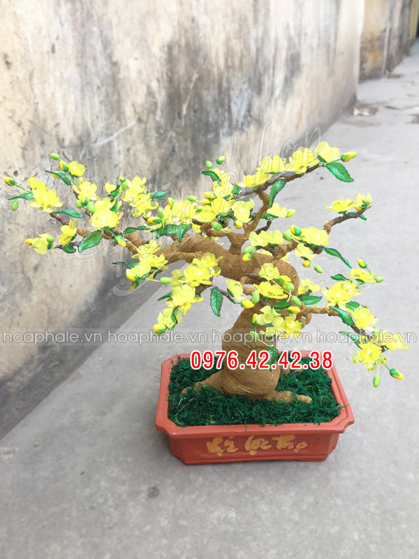Goc bonsai cay hoa mai o Trung Kinh