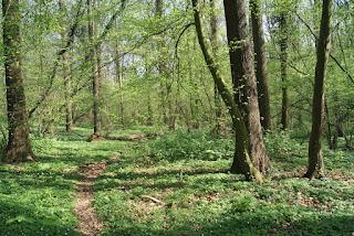 Ein Trampelpfad führt durch den Wald und biegt rechts um eine Kurve ab