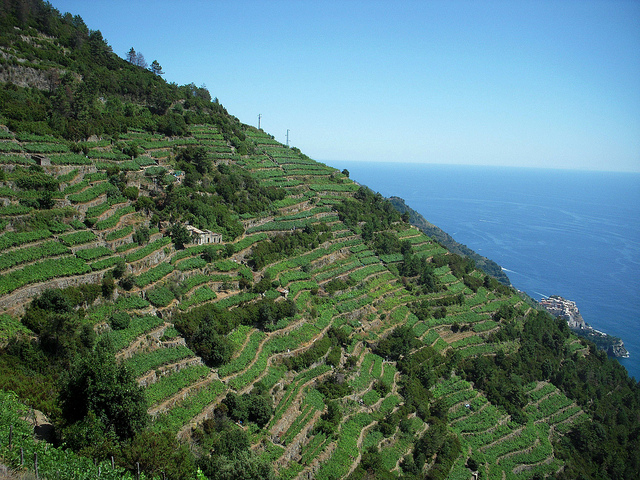 Wineries in the Cinque Terre