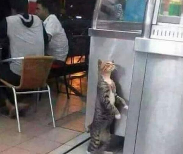 Nanti Nak Buang Kucing Tu, Ganggu Pelanggan Aku Je Nak Makan! - Kisah Wanita Aniaya Kucing Akhirnya Terima Padah